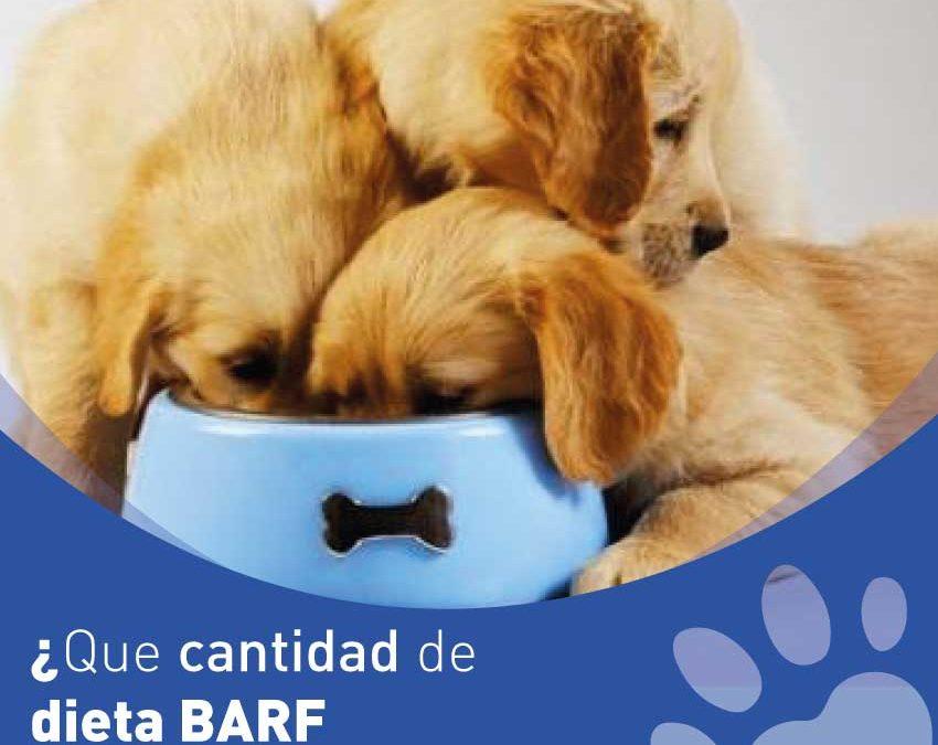 ¿Que cantidad de dieta BARF debo de dar a mi perro?