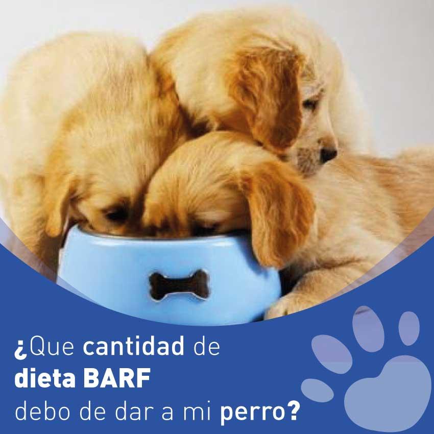 Cantidad Dieta BARF perros