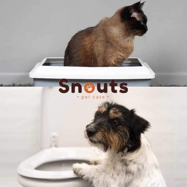 Cálculos Renales y problemas urinarios en mascotas
