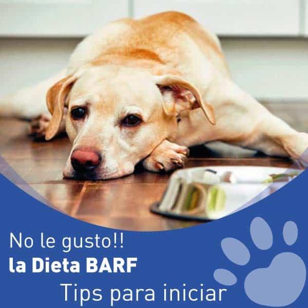 Tips para Iniciar la Dieta Barf, si No le gusto la a mi perro