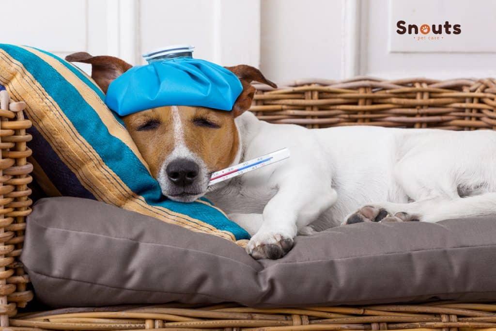 Pueden las mascotas contraer coronavirus