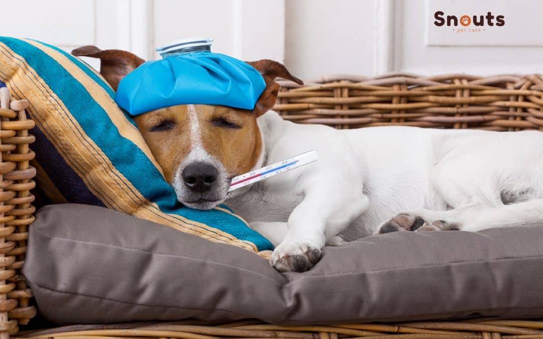 ¿Pueden nuestras mascotas contraer coronavirus? Esto es lo que necesitas saber.