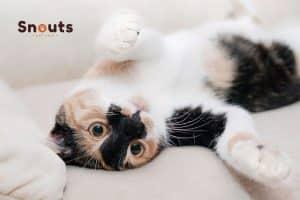 Pueden los gatos contraer coronavirus
