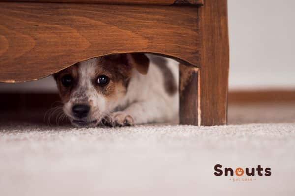 mi perro se esconde debajo de la cama