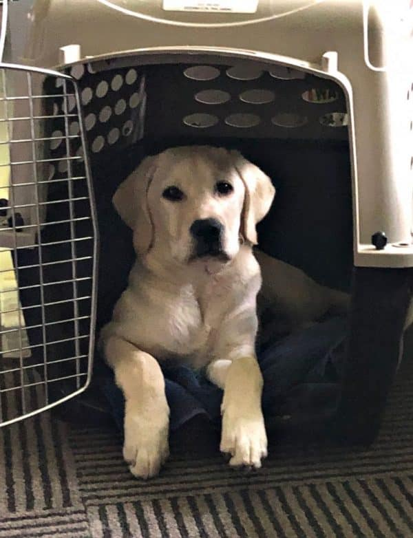 perro de servicio medico