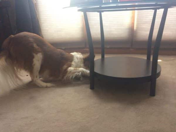 ejercicios para perros