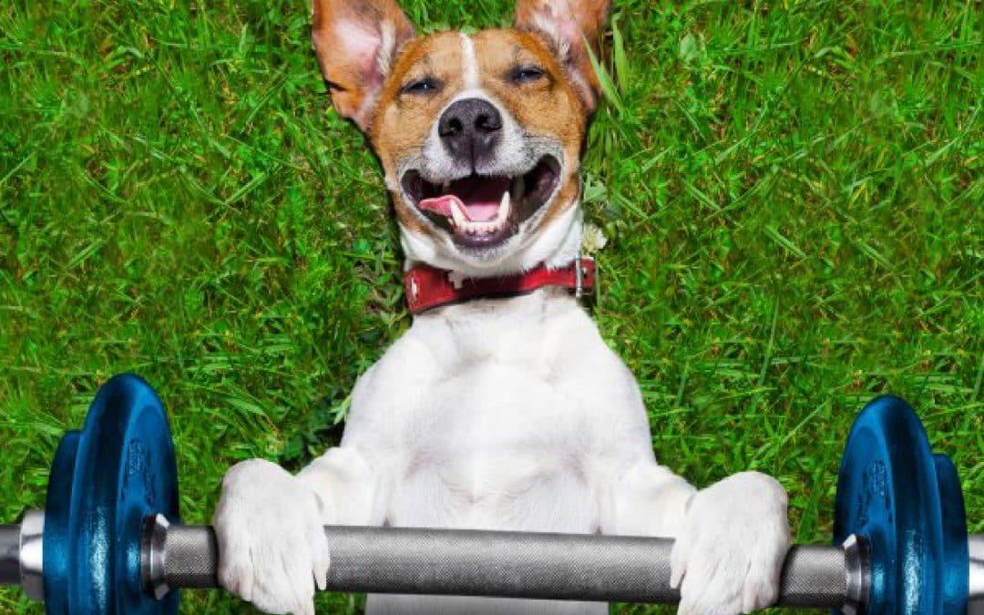 5 ejercicios en interiores para mantener a tu perro activo: incluso en espacios pequeños