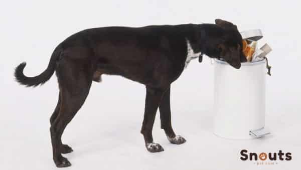 Gastroenteritis en perros: síntomas, causas y tratamientos