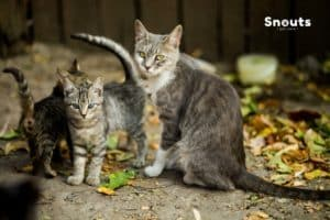Barf en gatos
