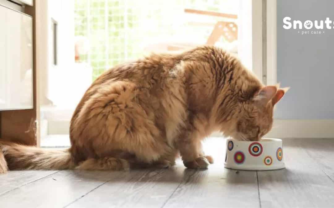 ¿Como empezar la dieta BARF en gatos?