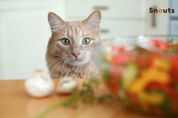 dieta Natural en gatos