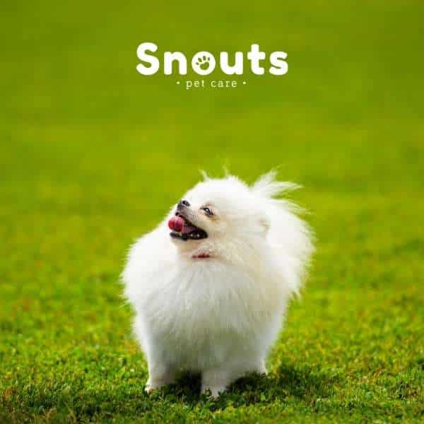 Comportamiento en Perros con Mucha Energía. Tips para crear un ambiente tranquilo