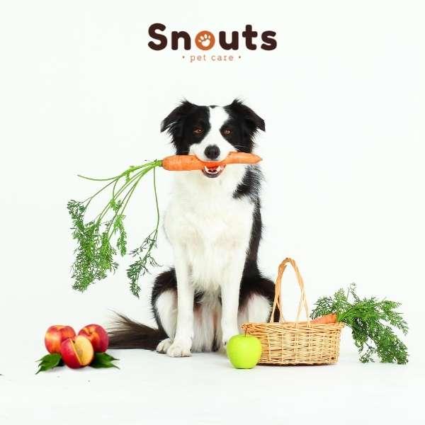 Porque alimentar mi perro con frutas y verduras
