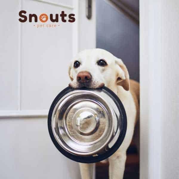 Porque el ayuno es bueno para tu perro y que beneficios aporta a su salud.