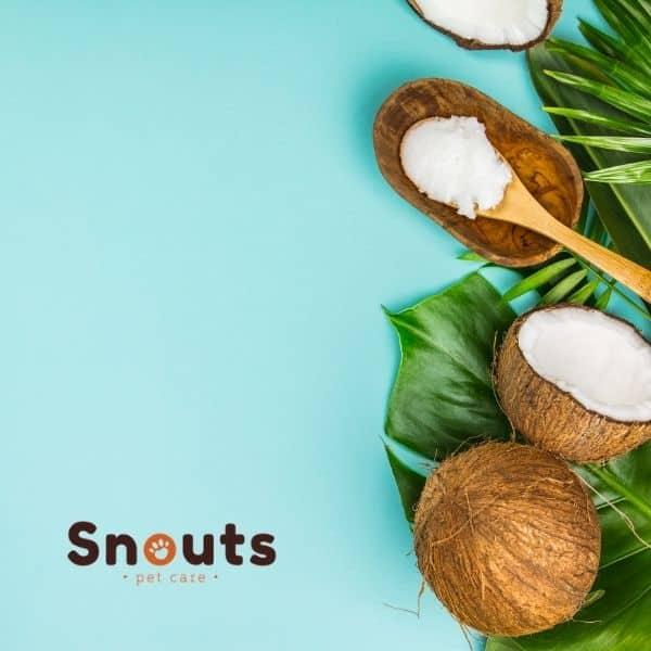 Beneficios y usos del aceite de coco en nuestras mascotas