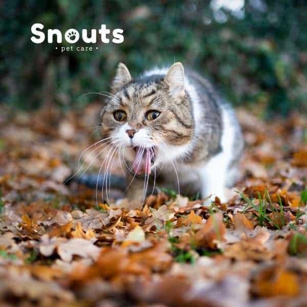 Bolas de pelo en gatos-Síntomas y como eliminarlas