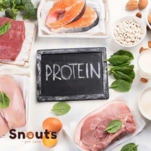 proteina alta en dieta barf
