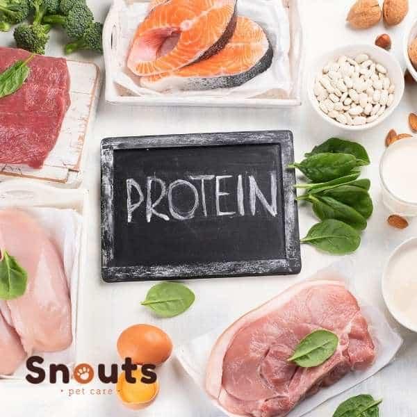 ¿Es la dieta cruda (Barf) demasiado alta en proteína?
